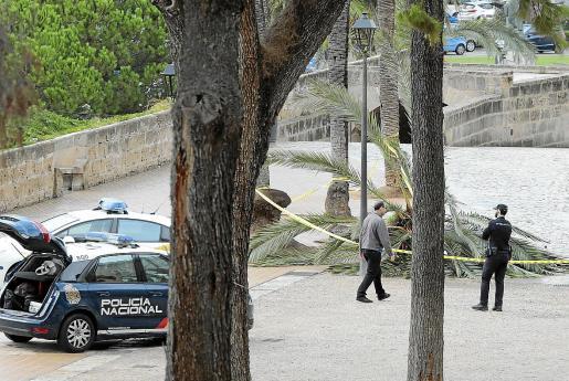 Agentes del Grupo de Homicidios del Cuerpo Nacional de Policía se hicieron cargo de la investigación. Tras analizar la escena del trágico accidente y los informes de los técnicos del Ajuntament de Palma, apuntaron que la muerte fue accidental.