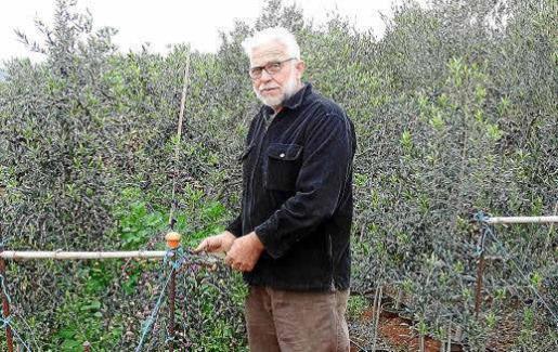 Sebastià Crespí –en la imagen, con los olivos– ha estado prácticamente toda su vida ligado al mundo de la agricultura.