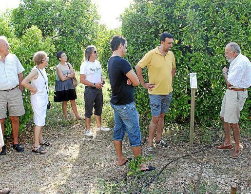 Puigserver muestra la colección de cítricos a los visitantes que el sábado se acercaron a sa Vinyassa.