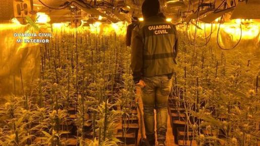 Los cultivos se encontraban en naves diseñadas para el cultivo intensivo y de alto rendimiento de marihuana de unos 700 m² en las localidades de Gerindote, Fuensalida y Torrijos, todas en la provincia de Toledo.