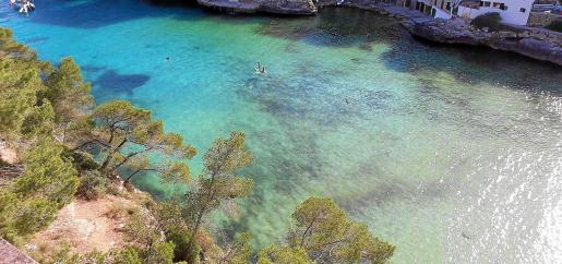 Las altas temperaturas provocan que un alga marina tiña las aguas, siempre cristalinas, de Cala Santanyí.