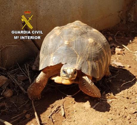 Imagen de uno de los ejemplares de tortuga recuperados.
