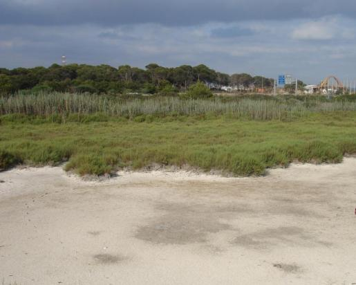 Imagen general de los terrenos de Ses Fontanelles.