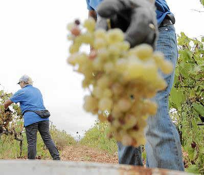 Mallorca cuenta con un ciclo superior de FP de la industria vitivinícola en el IES Felanitx.