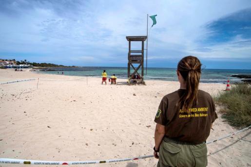 Un agente de medioambiente vigila la zona delimitada donde una tortuga de la especie 'Caretta caretta', conocida como 'boba' ha depositado varios huevo este viernes en la arena de la playa de Punta Prima de Sant Lluís.