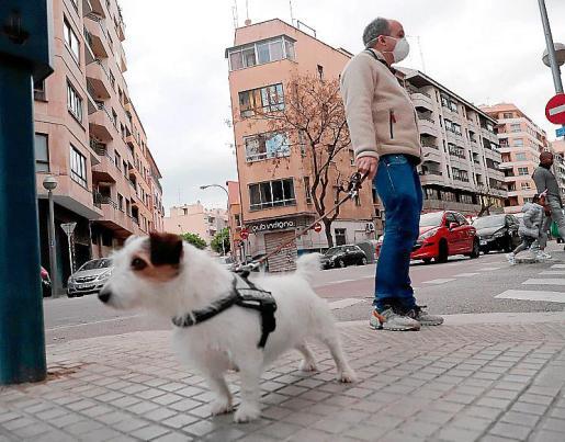 Un hombre con la mascarilla puesta paseando a su perro en Palma.