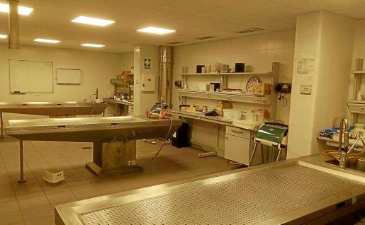 La sala de autopsias de Palma lleva sin funcionar cerca de dos semanas por falta de personal.