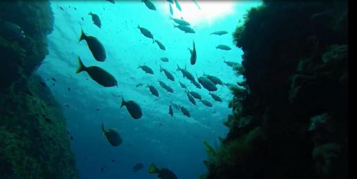 El Toro es la reserva marina con más peces de Baleares.