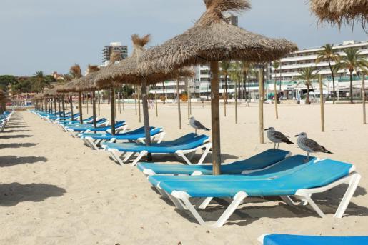 La playa de Magaluf, vacía.