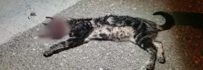 Dos jóvenes torturan a un gato hasta la muerte en Manacor