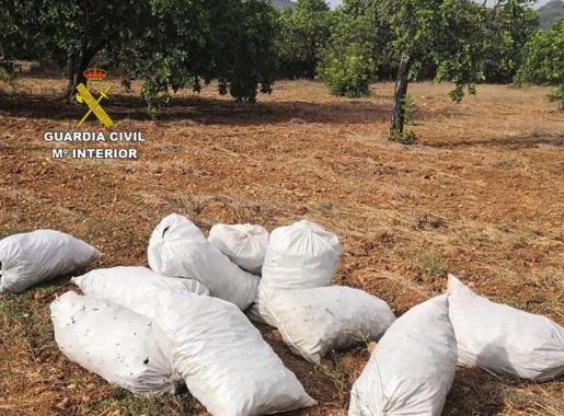 Estos son algunos de los sacos de algarrobas recuperados tras la detención practicada por la Guardia Civil.