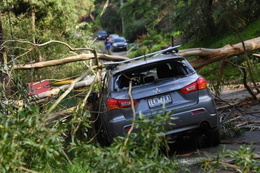 Árboles caidos sobre un vehículo produjeron las muertes en el estado de Victoria.