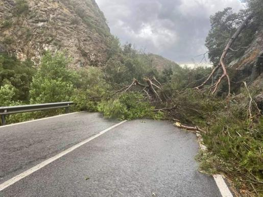 Carretera Palma a Valldemossa.
