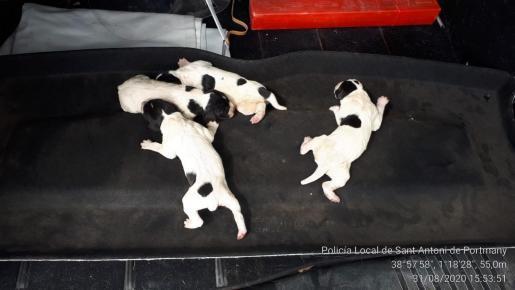 Los cachorros tras ser rescatados del contenedor.