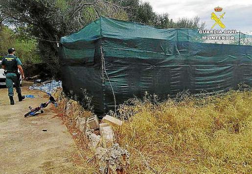 La Guardia Civil ha desmantelado la plantación.