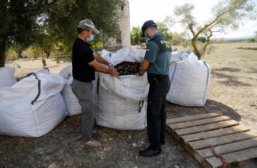 Los agentes extreman el control después de registrarse robos de algarrobas, cuyo precio ha aumentado considerablemente este año