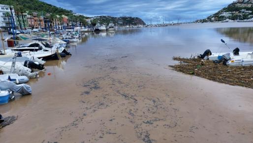 Aspecto de color marrón, en el Port d'Andratx.