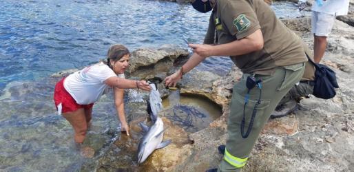 Rescate de la cría de delfín.