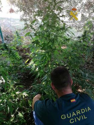 Un agente de la Guardia Civil con las plantas ocultas bajo árboles.