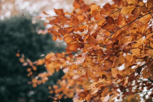 El otoño será con gran probabilidad más cálido y seco de lo normal.