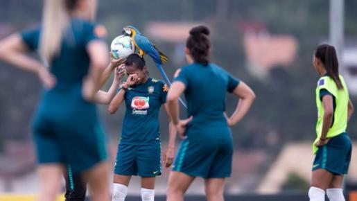 Un guacamayo se convirtió en el protagonista del encuentro al colarse en el campo e interrumpir el juego que en ese momento se disputaba en Teresópolis, en la provincia de Río de Janeiro, en Brasil.