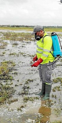 Un técnico de Cort fumigando este mayo en el Pla de Sant Jordi por la presencia de mosquitos.