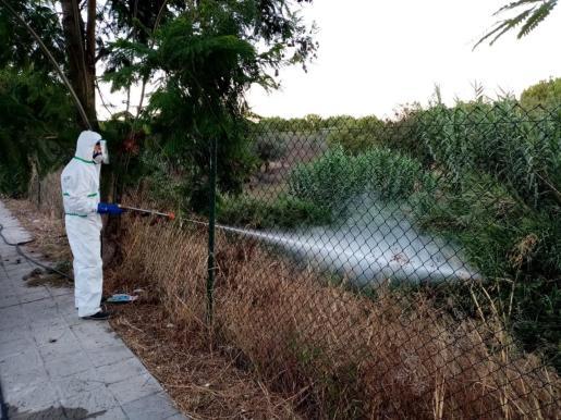 Los municipios con afectados han fumigado las zonas rurales para combatir la propagación.