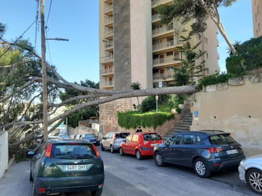 Imagen del árbol caído.
