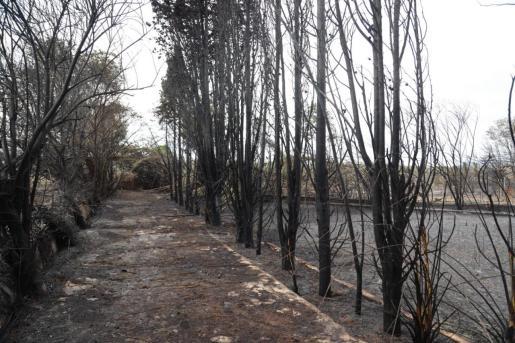 Una de las zonas más afectadas de s'Albufera por el incendio.