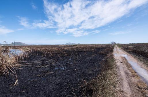 Zona calcinada por el incendio que afecta desde el viernes por la tarde al parque natural de S'Albufera de Mallorca.