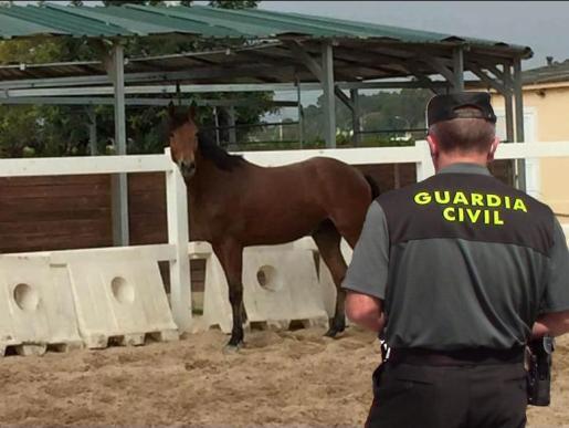 El caballo ha sido recuperado en Pollença.