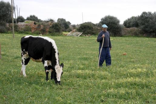 La vaca de la reina es una adaptación de la raza friburguesa.