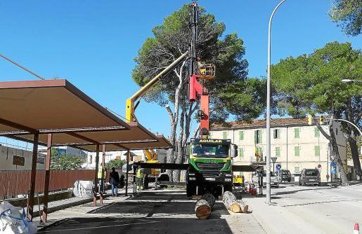 Los trabajos se iniciaron este jueves y está previsto que se prolonguen unas tres semanas.