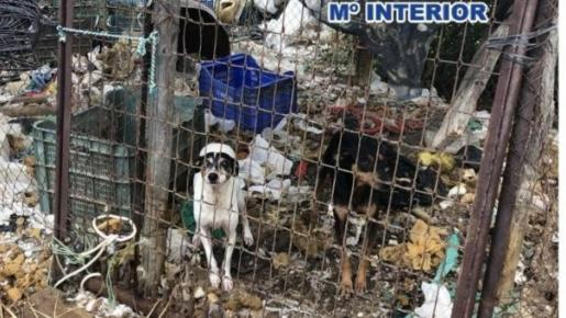 Se reconoce el carácter «sintiente» de los animales y las sanciones pueden alcanzar los 45.000 euros.