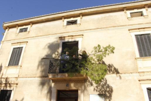 Cumpliendo con la tradición los bodegueros, acompañados de la regidora Candela Atienza, colocaron una gran rama de pino en el balcón de Ca s'Apotecari. A continuación realizaron un pasacalles con sus tractores para engalanar las farolas de la Plaça y de la calle Larga.