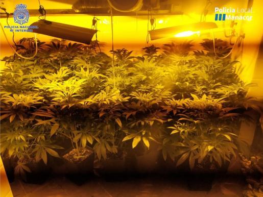 Comprobaron que en una de las habitaciones de la casa se cultivaban 30 plantas de marihuana con un sistema de interior con focos eléctricos y ventiladores.