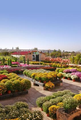 El gabinete del Govern ha aprobado exceptuar del cierre comercial a las 20.00 horas a los establecimientos de jardinería y planta viva.