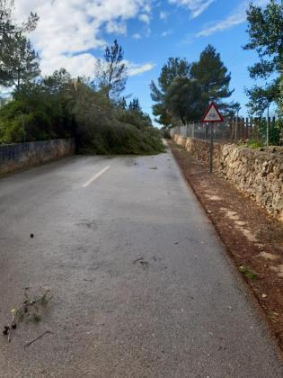 Varias carreteras de Mallorca han tenido que ser cortadas al tráfico por incidentes provocados por el paso de 'Hortense'.