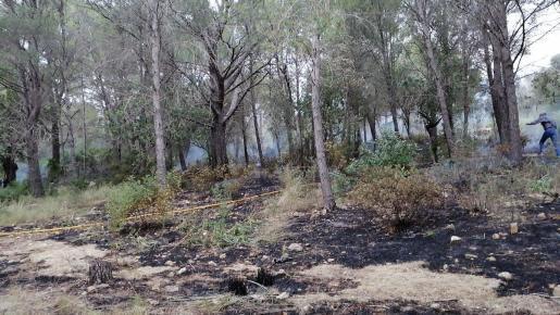 Imagen del incendio declarado en una zona de Alcúdia.