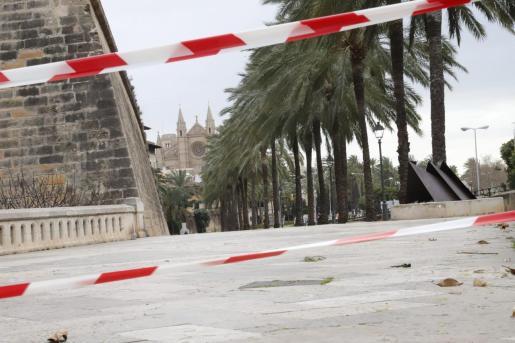 El Ajuntament de Palma ha decidido cerrar, a partir de las 9.00 horas, el acceso a peatones en el Paseo Sagrera y toda la zona de Dalt Murada.