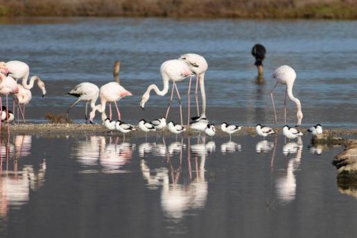 El censo ha dado una cifra de 25.179 aves de 68 especies diferentes que están pasando el invierno en las zonas húmedas de las Islas, un número similar al obtenido en los dos últimos años, ha detallado la entidad verde en un comunicado.