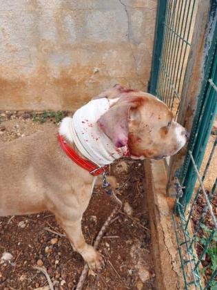 Denuncian el mal estado de un perro en Son Reus.