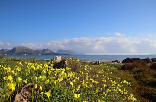 Este mes de febrero se ha vivido una primavera adelantada en Mallorca.