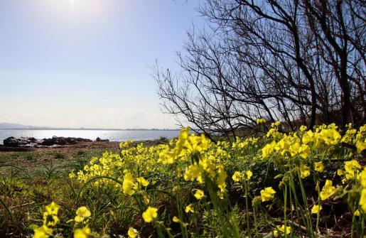 Los campos de Mallorca ofrecen un aspecto muy hermoso.