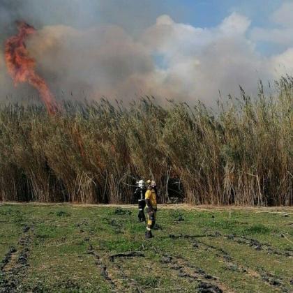 La superficie afectada por las llamas, ha avanzado Medio Ambiente, ha sido aproximadamente 0,4 hectáreas de cañizo.