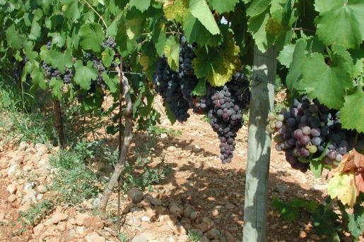 La exportación de vino se ha visto afectada, solo han crecido las ventas a la Península.