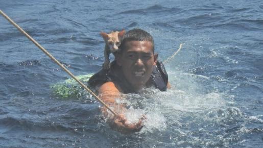 Varios marines de Tailandia se convirtieron en auténticos héroes para unos gatos que estaban sobre un barco que se estaba hundiendo.