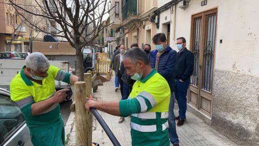 Las autoridades han comprobado el proceso de siempre de árboles en Palma.