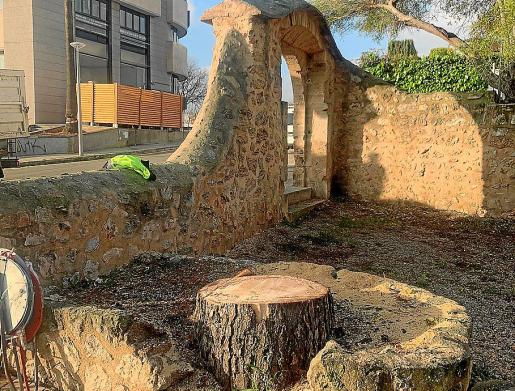Imagen del pino talado junto al arco, que también está protegido.