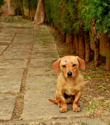 Los últimos datos contabilizados invitan al optimismo, se ha reducido el abandono de mascotas en un 32,4 % en Palma.
